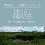 Wildlife Photography at the New Jersey Great Swamp