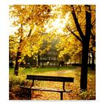 Westcott 6x8 Ft Autumn In The Park Scenic Background